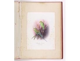 STANISLAS (Frère). -  Principaux oiseaux de l'Australie dessinés sur nature par frère Stanislas, pensionnat des frères maristes.