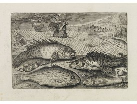 COLLAERT, A. (after). -  Glaucus, Cantharus, Salpa, Rarus. (Piscium Vivæ Icones - Fish).